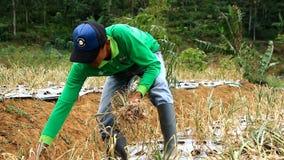 Фермеры и правительство сделать первый сбор из семян чеснока видеоматериал