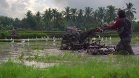 Фермеры культивируют поле перед засаживать рис Поле покрыто с грязной водой Красивая сельская сцена Travell сток-видео