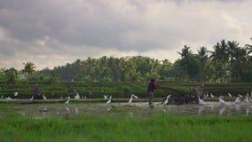 Фермеры культивируют поле перед засаживать рис Поле покрыто с грязной водой Красивая сельская сцена Travell акции видеоматериалы