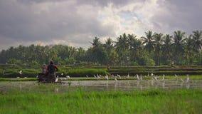 Фермеры культивируют поле перед засаживать рис Поле покрыто с грязной водой Красивая сельская сцена Travell видеоматериал
