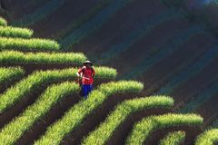 Фермеры лука от majalengka argapura Стоковые Изображения RF