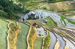 Фермеры на поле риса в Вьетнаме Стоковая Фотография RF