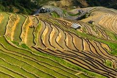 Фермеры на поле риса в Вьетнаме Стоковые Изображения