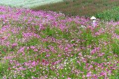 Фермеры полют в утре весны eco цветочного сада Стоковые Изображения