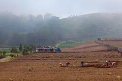 Фермеры работают в поле выкапывая вверх почву для огорода Стоковая Фотография RF