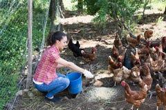 Фермер давая подавая цыплят на птицеферме стоковые изображения