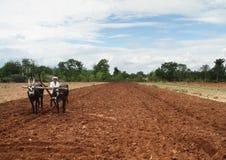 Фермер вспахивает поля Стоковые Изображения RF