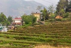 Фермер в поле Вьетнаме риса стоковое фото rf