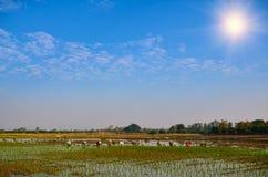 Фермер в поле на день света солнца Стоковые Фото