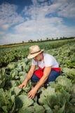 Фермер в поле капусты с голубым небом Стоковая Фотография RF