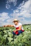 Фермер в поле капусты с голубым небом Стоковое фото RF