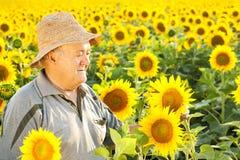 Фермер в поле солнцецвета стоковое фото rf