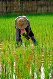 Фермер в поле Стоковое Изображение RF