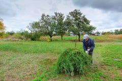 Фермер в старых одеждах косит траву в поле стоковые изображения