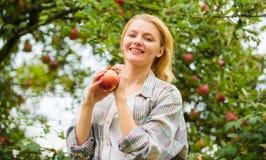 Фермер довольно белокурый с яблоком красного цвета аппетита Местная концепция урожаев Предпосылка сада яблока владением женщины С стоковые фотографии rf