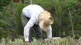 Фермер, лейборист, работник видеоматериал
