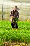 Фермер жать в органической ферме стоковое изображение