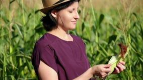 Фермер женщины стоит среди кукурузного поля и проверяет качество сбора концепция земледелия и сбора акции видеоматериалы