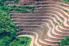 Фермер засаживает рис на террасном поле на новый сезон стоковое фото