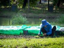 Фермер засаживает саженцы в графиках Фронт зеленая трава Задняя часть пруд для культивирования Стоковые Фотографии RF