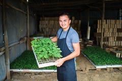 Фермер засаживая молодые саженцы салата салата в огороде стоковые фотографии rf