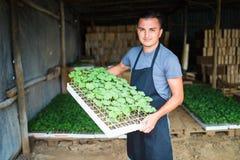 Фермер засаживая молодые саженцы салата салата в огороде стоковое фото