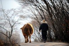 Фермер и корова стоковые изображения rf