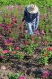 Фермер и поле цветков Стоковое фото RF