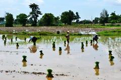 Фермер Лаоса Стоковая Фотография