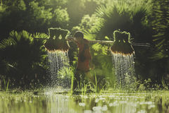Фермер мальчика на зеленых полях Стоковая Фотография RF