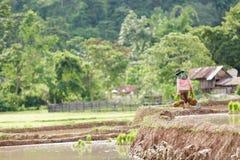 Фермер Мьянмы Стоковые Изображения RF