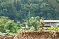 Фермер Мьянмы Стоковое фото RF