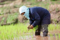 Фермер Мьянмы стоковое изображение rf