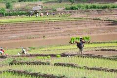 Фермер Мьянмы стоковая фотография rf