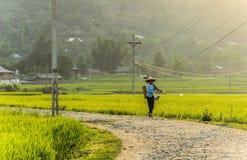 Фермер на поле риса в Вьетнаме Стоковые Изображения RF