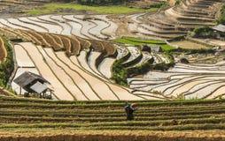 Фермер на поле риса в Вьетнаме Стоковая Фотография