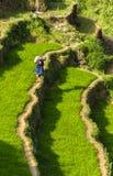 Фермер на поле риса в Вьетнаме Стоковое фото RF