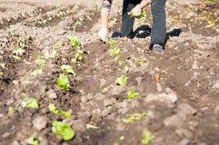 Фермер на поле Стоковое Изображение RF