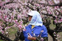 Фермер персика Стоковая Фотография RF