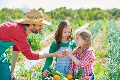 Фермер показывая овощам сбор к девушкам ребенк Стоковые Изображения
