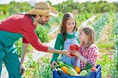 Фермер показывая овощам сбор к девушкам ребенк Стоковое фото RF
