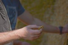 Фермер потревожился о качестве корма для животных агробизнес Стоковая Фотография RF