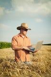 Фермер проверяет зерно пшеницы в поле стоковое изображение