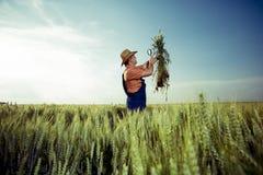 Фермер проверяя качество пшеницы с лупой стоковые изображения rf