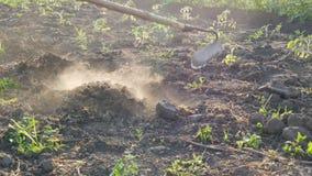 Фермер работает на земле Выкапывая отверстия с сапкой сада Сухие земля и пыль от ее Аграрный инструмент в поле сток-видео