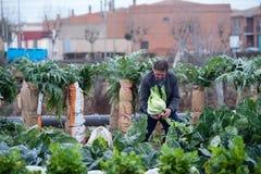 Фермер работая в его саде стоковые фотографии rf