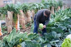 Фермер работая в его саде стоковое фото rf