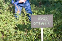 Фермер работая в органическом огороде стоковое фото