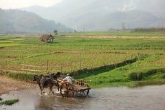 Фермер работая в поле с индийским буйволом стоковые фотографии rf