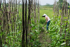 Фермер работая в поле стоковые изображения